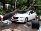 Hà Nội: Hàng loạt cây đổ trong mưa, đè lên người, ô tô và xe máy
