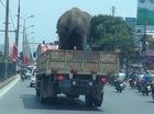 Xe tải chở voi giữa đường Hà Nội gây xôn xao