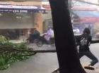 Bất chấp mưa gió, thanh niên kéo cành cây chắn ngang đường tại Sài Gòn