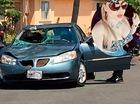 Người phụ nữ lái xe hơn 1 km với xác chết xuyên qua kính chắn gió