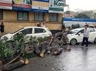Hà Nội: Gió to làm cây đổ đè bẹp ôtô trên phố Phan Huy Chú