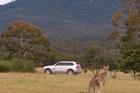 Volvo phát triển hệ thống phát hiện kangaroo