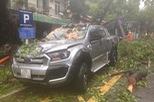Hà Nội: Mưa bão, cây đổ trúng xe bán tải Ford Ranger