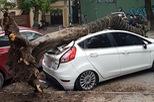 Hà Nội: Cây phượng đổ trúng Ford Fiesta đỗ dưới lòng đường vào sáng sớm