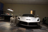 Đại gia Trung Đông nuôi 2 chú hổ trắng trong gara toàn xe