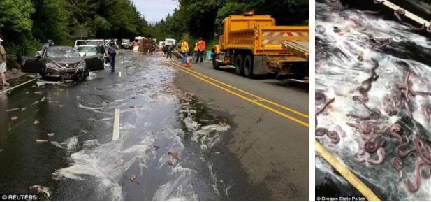 Cuộc đổ bộ của bầy lươn: Hơn 3,4 tấn lươn đổ ra đường tạo nên cảnh tượng kinh hoàng - Ảnh 4.