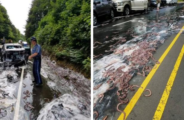 Cuộc đổ bộ của bầy lươn: Hơn 3,4 tấn lươn đổ ra đường tạo nên cảnh tượng kinh hoàng - Ảnh 5.