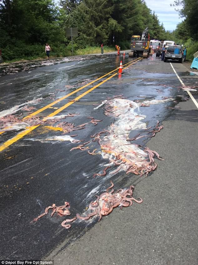 Cuộc đổ bộ của bầy lươn: Hơn 3,4 tấn lươn đổ ra đường tạo nên cảnh tượng kinh hoàng - Ảnh 2.