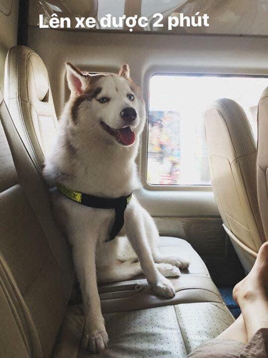 Theo chủ về quê ăn Tết, chú chó say xe tới mềm nhũn nhưng dân mạng lại bật cười vì 1 điều - Ảnh 1.