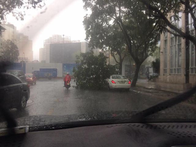 Mưa lớn tại Sài Gòn giữa mùa khô, cành cây đổ trúng xe sang Mercedes-Benz S-Class - Ảnh 1.