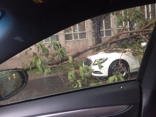 Mưa lớn tại Sài Gòn giữa mùa khô, cành cây đổ trúng xe sang Mercedes-Benz S-Class - Ảnh 2.