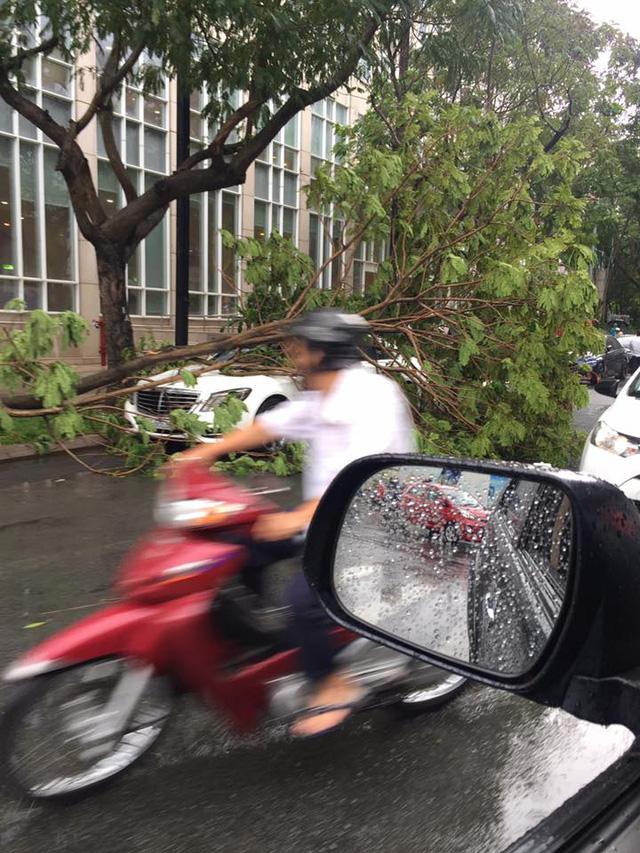 Mưa lớn tại Sài Gòn giữa mùa khô, cành cây đổ trúng xe sang Mercedes-Benz S-Class - Ảnh 3.