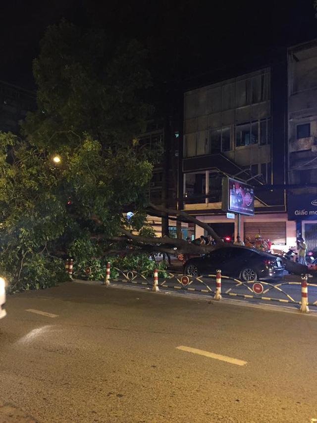 Sài Gòn: Cây xà cừ bật gốc, đè trúng nóc Mazda2 Sedan chạy ngang qua - Ảnh 1.