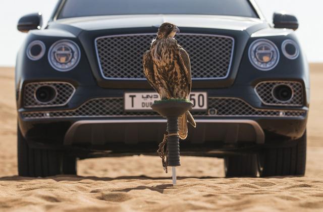 Nhà giàu Trung Đông mua hẳn Bentley Bentayga phiên bản giới hạn phục vụ thú... chơi chim - Ảnh 12.