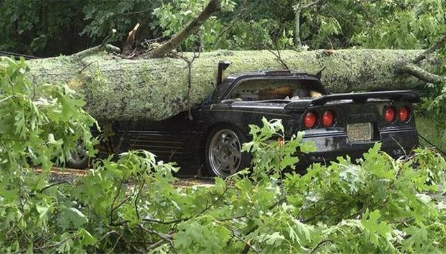 Chevrolet Corvette bị gốc cây đè bẹp, người lái may mắn sống sót - Ảnh 2.