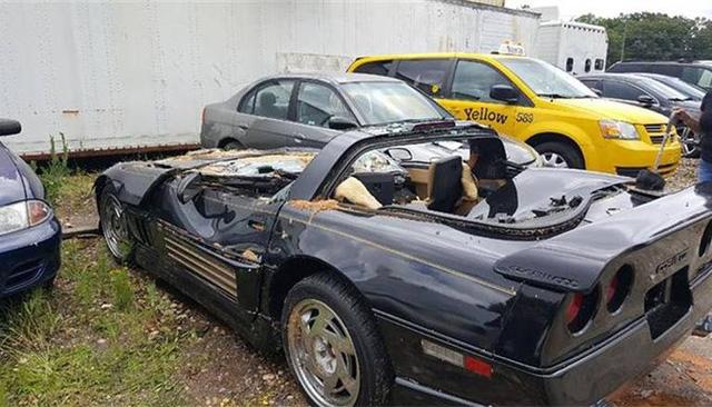 Chevrolet Corvette bị gốc cây đè bẹp, người lái may mắn sống sót - Ảnh 1.