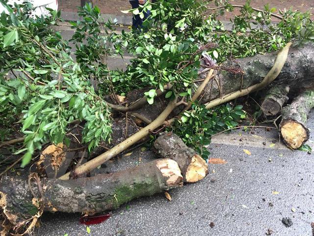 Hà Nội: Gió to làm cây đổ đè bẹp ôtô trên phố Phan Huy Chú - Ảnh 1.