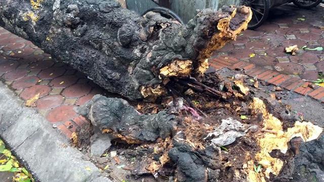Hà Nội: Gió to làm cây đổ đè bẹp ôtô trên phố Phan Huy Chú - Ảnh 2.