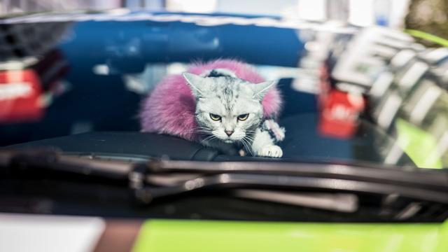 Torako - cô mèo có cuộc sống vương giả trên Lamborghini Gallardo - Ảnh 3.