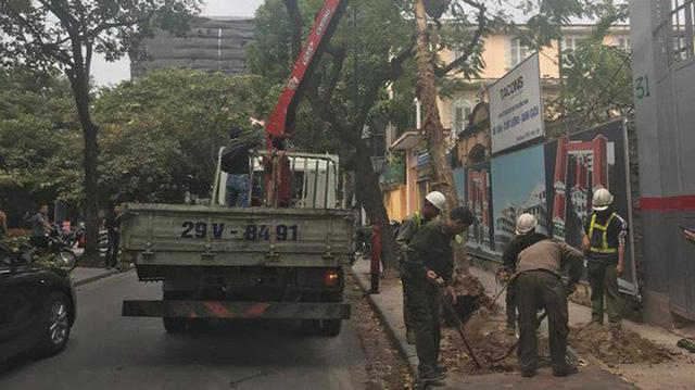 Hà Nội: Cây bằng lăng bật gốc, đổ trúng xe Camry đậu trên vỉa hè