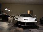 """Đại gia Trung Đông nuôi 2 chú hổ trắng trong gara toàn xe """"xịn"""""""