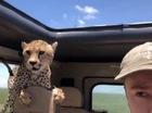 Báo đốm lầm tưởng Land Rover là... Jaguar?