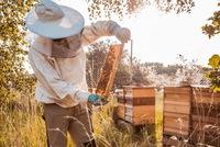 Có ai đã từng nếm mật ong do Porsche sản xuất?