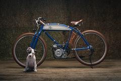 Xế cổ Ducati tạo cảm hứng cho những người yêu chó