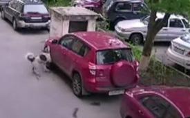 Chú chó lao vào cắn xé chiếc Toyota RAV4