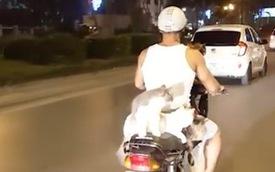 Thanh niên Hà Nội đèo cả gia đình mèo đi chơi phố bằng xe máy bất ngờ nổi tiếng trên MXH nước ngoài