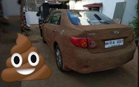 Trời quá nắng nóng, chủ xe Toyota Corolla Altis lấy… phân trát lên xe để cách nhiệt