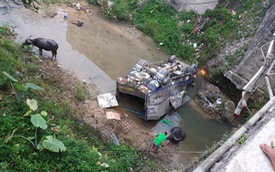 Tai nạn hy hữu xe tải chở trâu lao xuống suối, cả người và trâu cùng thương vong