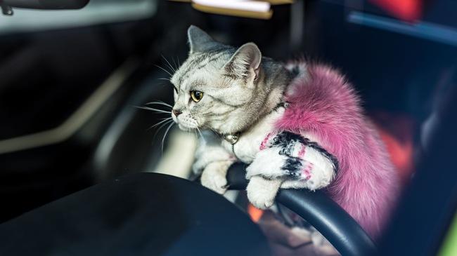 """Torako - """"cô mèo"""" có cuộc sống vương giả trên Lamborghini Gallardo"""